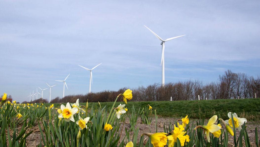 Bloemen en molens, waar Nederland trots op is.